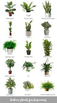 top house plants best 25 snake plant ideas on pinterest palm house plants where do snakes live and indoor