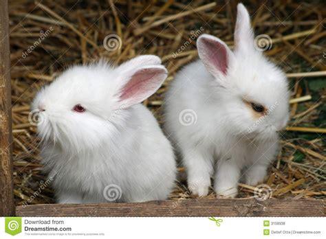 Baby Rabbit Id baby rabbit royalty free stock photos image 3158938