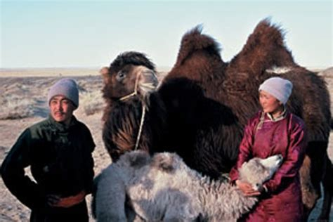 film kamel cinderella the story of the weeping camel 2003 byambasuren davaa