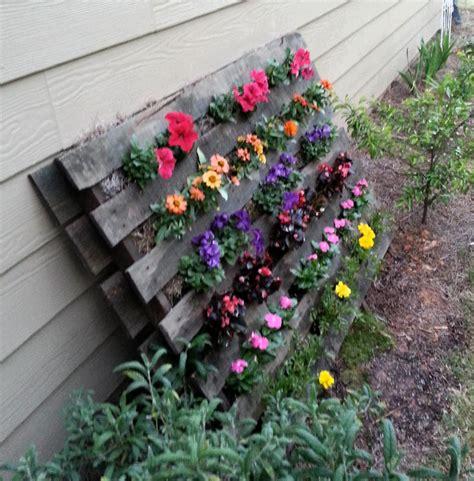 catalogo fiori da giardino oltre 1000 idee su coltivare i fiori su fiori