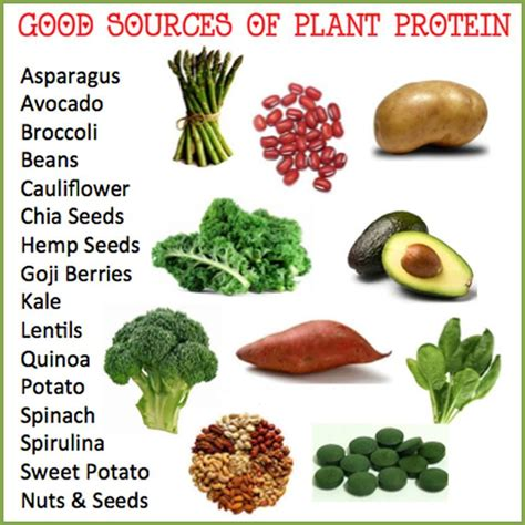 protein vegetarian protein foods for vegetarians protein foods it is