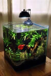 betta tank planted 6 gallon eheim rodstewart on plantedtank net