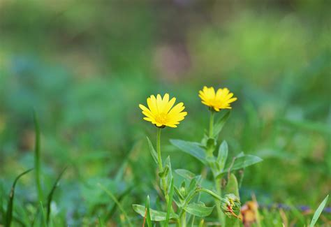 i fiori semplici semplici fiori di co foto immagini macro e up