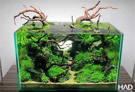 setup aquascape 25 best ideas about aquarium setup on pinterest fish in