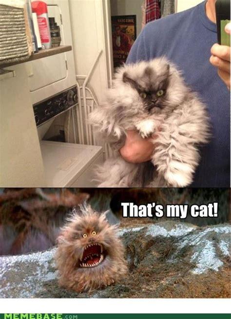 Colonel Meow Memes - meow meme memes
