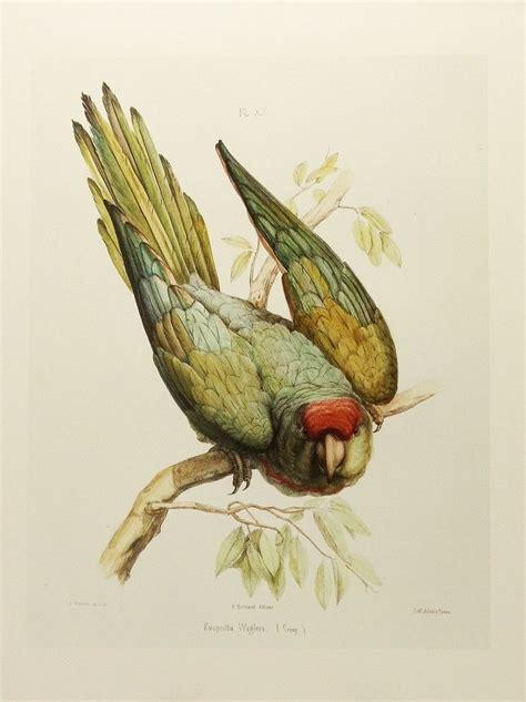 vintage illustration vintage bird illustration flying www pixshark com