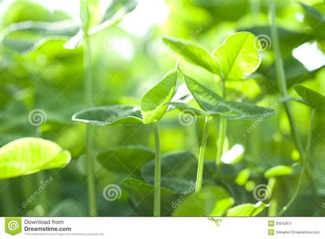 small green plant growing under sun shine stock image image 30042811