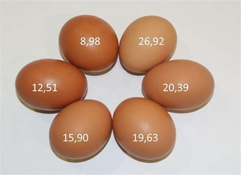 egg shell color egg shell color