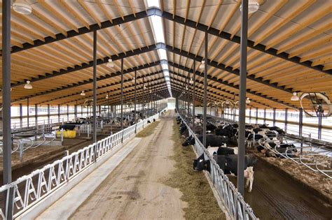 Dairy Cow Shed Design by Usa Free Stall Barn Lr Arlington Dairy Barn 4655 Steel