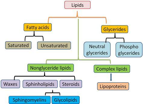 diagram of a lipid lipids biochemtastrophy