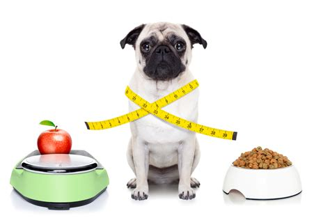 healthy dogs facts solutions for a healthy pet pleasant hill animal hospital