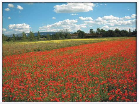 of flanders how in flanders fields poem inspired remembrance day poppies