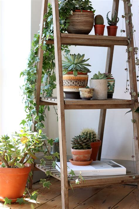 Ladder Shelf For Plants by Houseplant Inspiration Relationships Swans And Plants