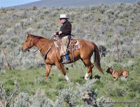 australian cattle cowboys hero cattle dogs cowboy showcase