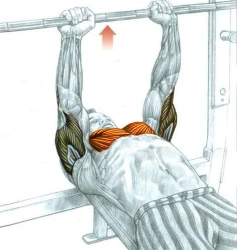 torn rotator cuff bench press structural balance assessments identifying preventing
