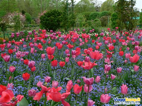 fiori the camomilla fior di emozioni