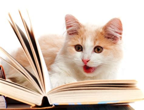 cat picture book if you hearing me talk about my cats we probably can