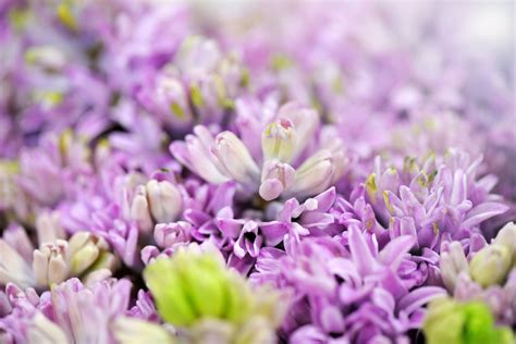 fiori per sfondi sfondi con fiori sfondissimo sfondi screensaver gratis