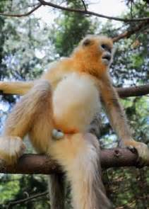 fat monkey funny pinterest