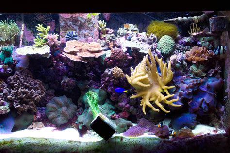 Live Rock Aquascape Gallery Barrier Reef