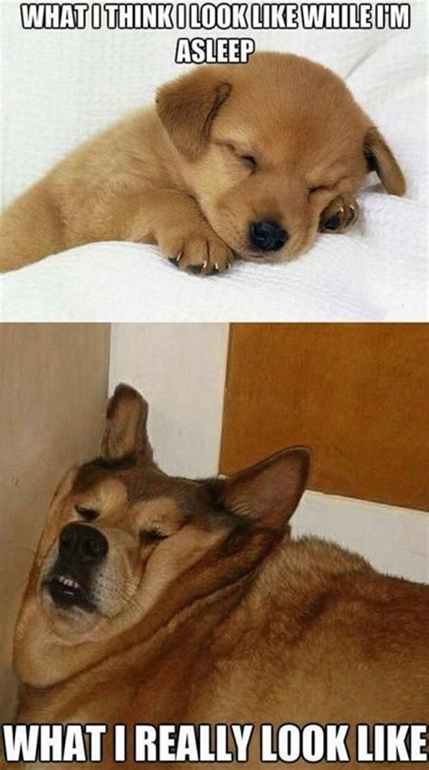 i like dogs sleeping what i think vs what i look like meme jokes memes pictures
