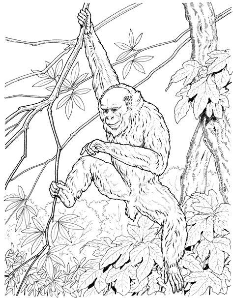 swinging monkey coloring page image gallery monkey drawing swinging