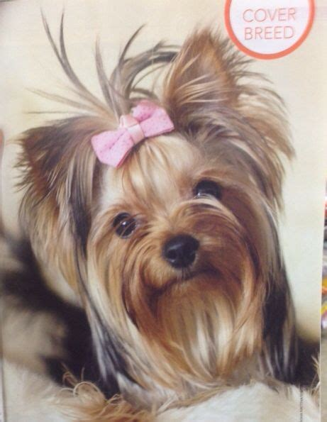 haircuts for toy yorkies 6984 best images about yorkie on pinterest