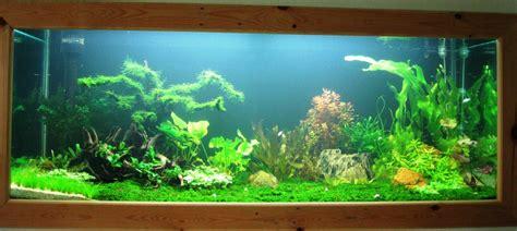 Lu Aquarium Dalam Air merawat tanaman aquascape