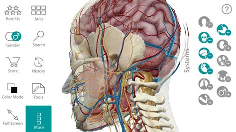 Human Anatomy human anatomy diagram learn more about human atlas