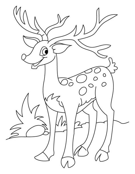 coloring page deer whitetail deer coloring pages coloring home