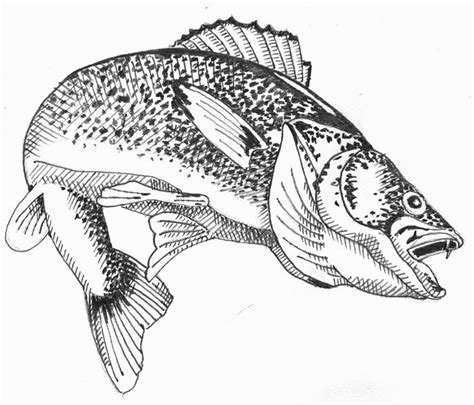 Walleye Coloring Pages Pictures To Pin On Pinterest Walleye Coloring Page