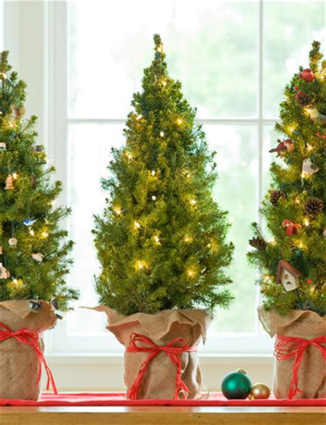 tabletop trees with lights tabletop tree living spruce with lights