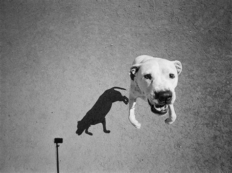 designboom dogs thomas roma s shadow portraits of dogs look like cave drawings