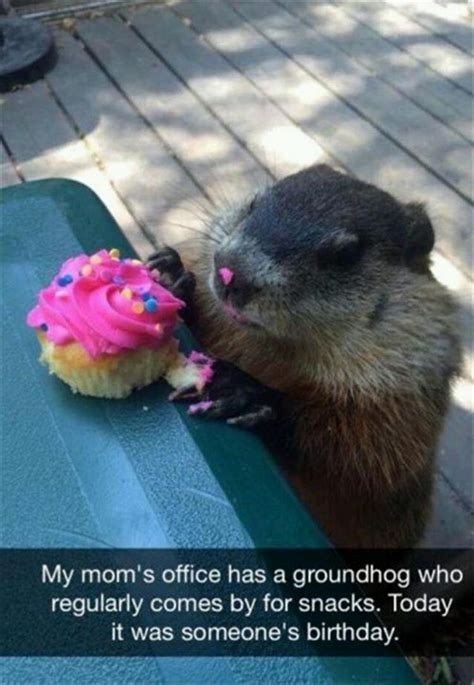 groundhog day birthday animal pictures of the day 20 pics