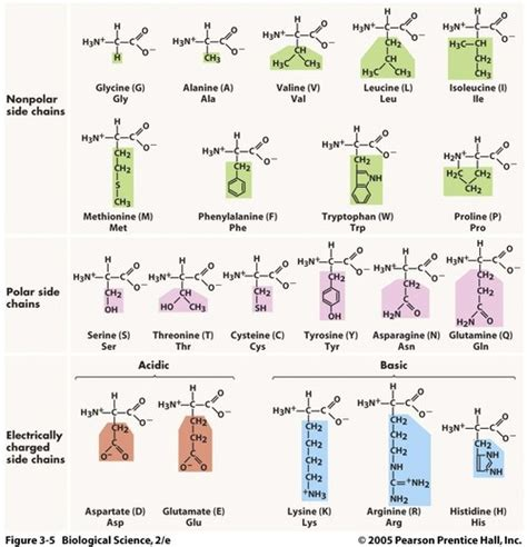 amino acids table science in a can proteins we ve talked about amino acids
