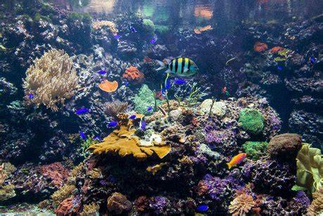 zoologischer garten berlin aquarium aquarium berlin visitberlin de