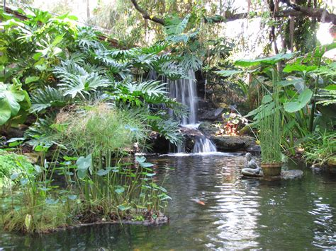 Sarasota Botanical Gardens Selby Gardens Sarasota Florida Bunnie S Garden