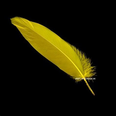 www feather wholesale yellow feathers