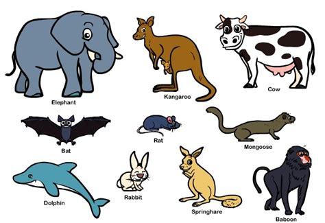 10 fakta tentang hewan mamalia yang perlu anda ketahui