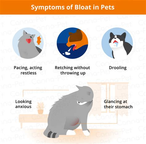 symptoms of bloat in dogs bloat in dogs cats causes signs symptoms canna pet