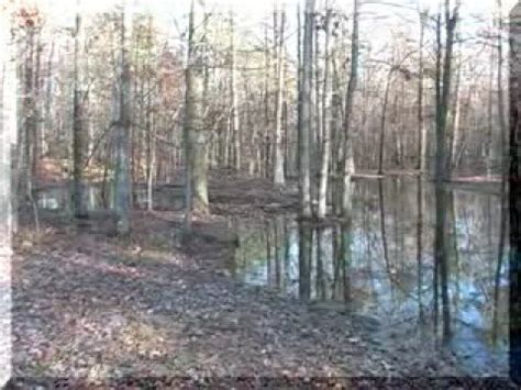 Which Feature Is Characteristic Of A Bottomland Hardwood Forest - arkansas bottomland hardwood unlike any other