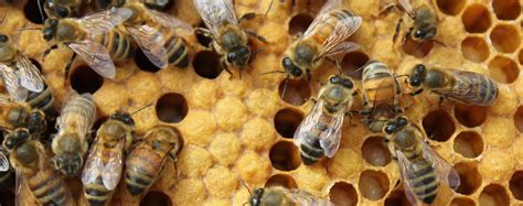 Bee Lab   Education, research and outreach related to