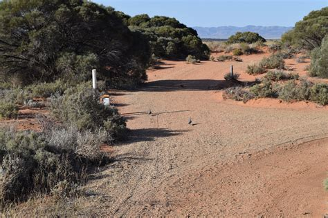 Arid Lands Botanic Gardens Australian Arid Lands Botanic Garden Adelaide