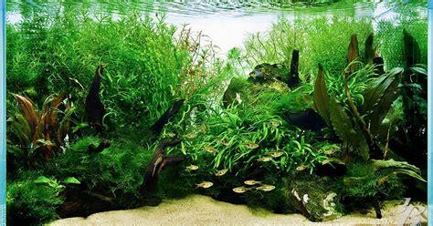 Pembersih Aquarium ikan pembersih aquascape akuarium ikan hias