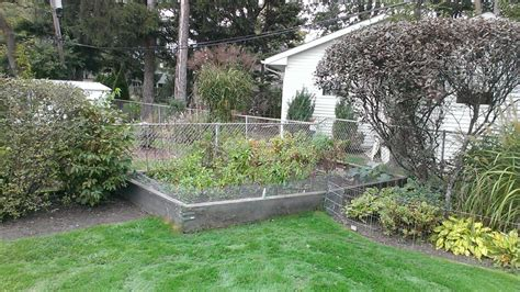4 Foot Trellis Before After 3 Raised Bed Gardens In A Corner 4 Foot
