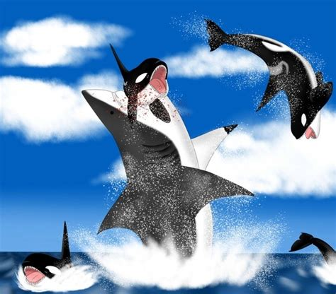 who would win a megalodon shark or a killer whale pod