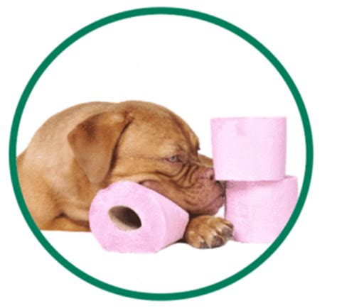 What Causes Soft Stools In Dogs by 5 Ways To Evaluate Health