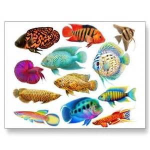 www.freshwater aquarium fish.com/aquarium fish.htm