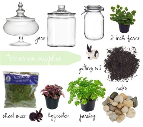 what you need for a terrarium 28 images how to make