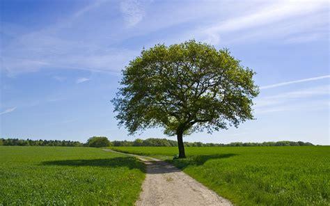 Bäume Pflanzen Jahreszeit 4007 by Gras Felder Stra 223 E B 228 Ume Himmel Hintergrundbilder Gras